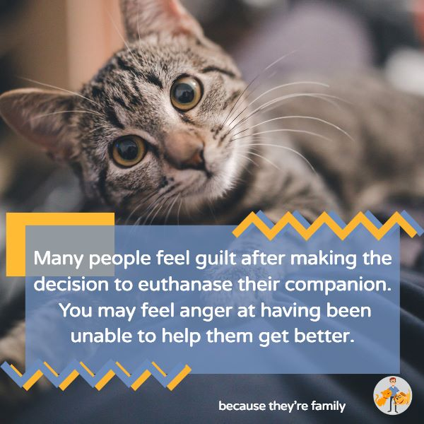 many people feel guilt or anger when they decide to euthanize their pet. This is a normal part of grieving