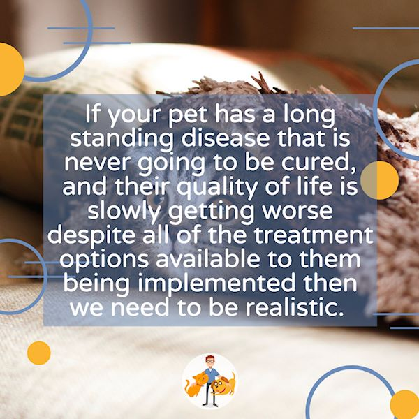 If your pet has a long term illness and they are getting worse then euthanasia may be the kindest option
