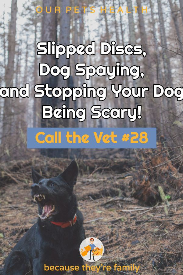 call the vet 28: slipped discs, dog fear, and when to spay