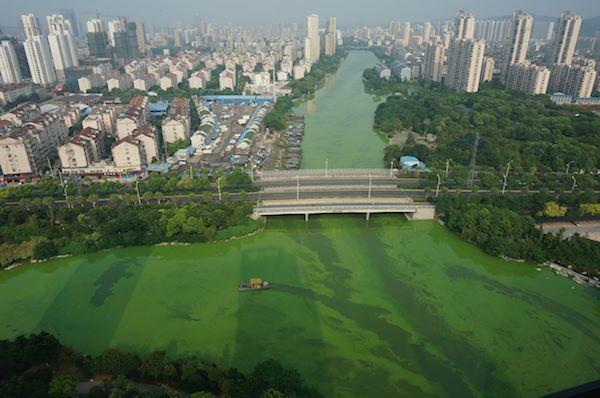 city lake covered in blue-green algae