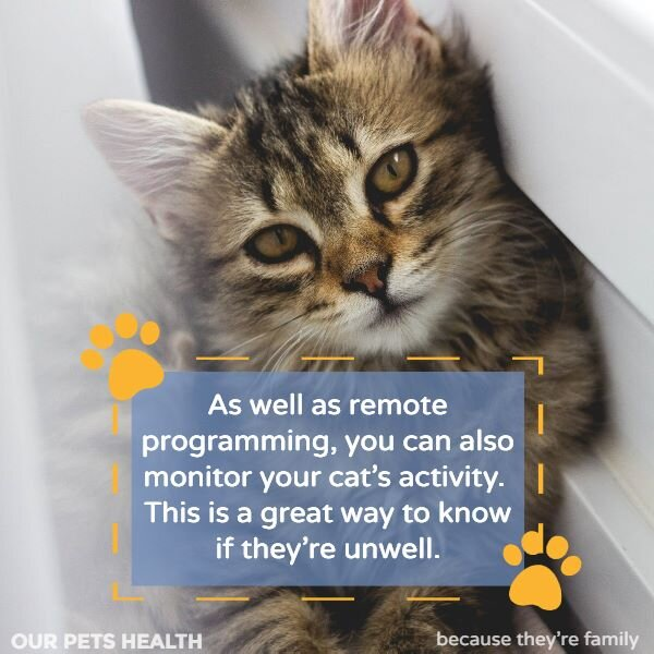 a microchip cat door can help you monitor your cat's health and activity levels