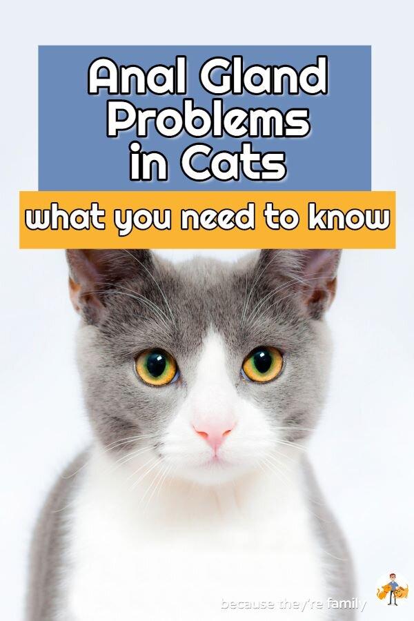cat anal gland problems