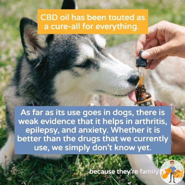 Does CBD oil help dogs with dementia?