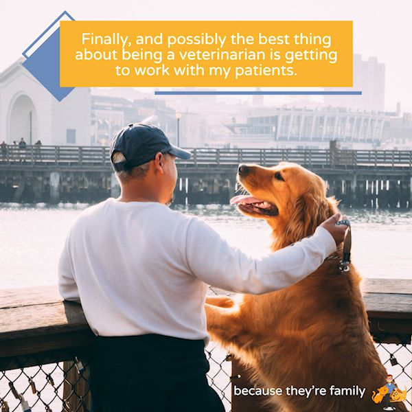 getting to work with my patients is one of my main pros to being a veterinarian