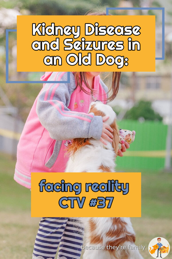 Kidney Disease And Seizures In An Old Dog Facing Reality Ctv 37 Our Pets Health