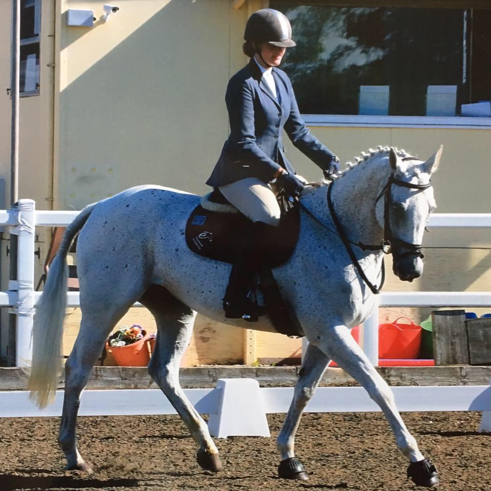 "A.P Equines RoR Horse : Minky 'I'll Ask O'Jay"""