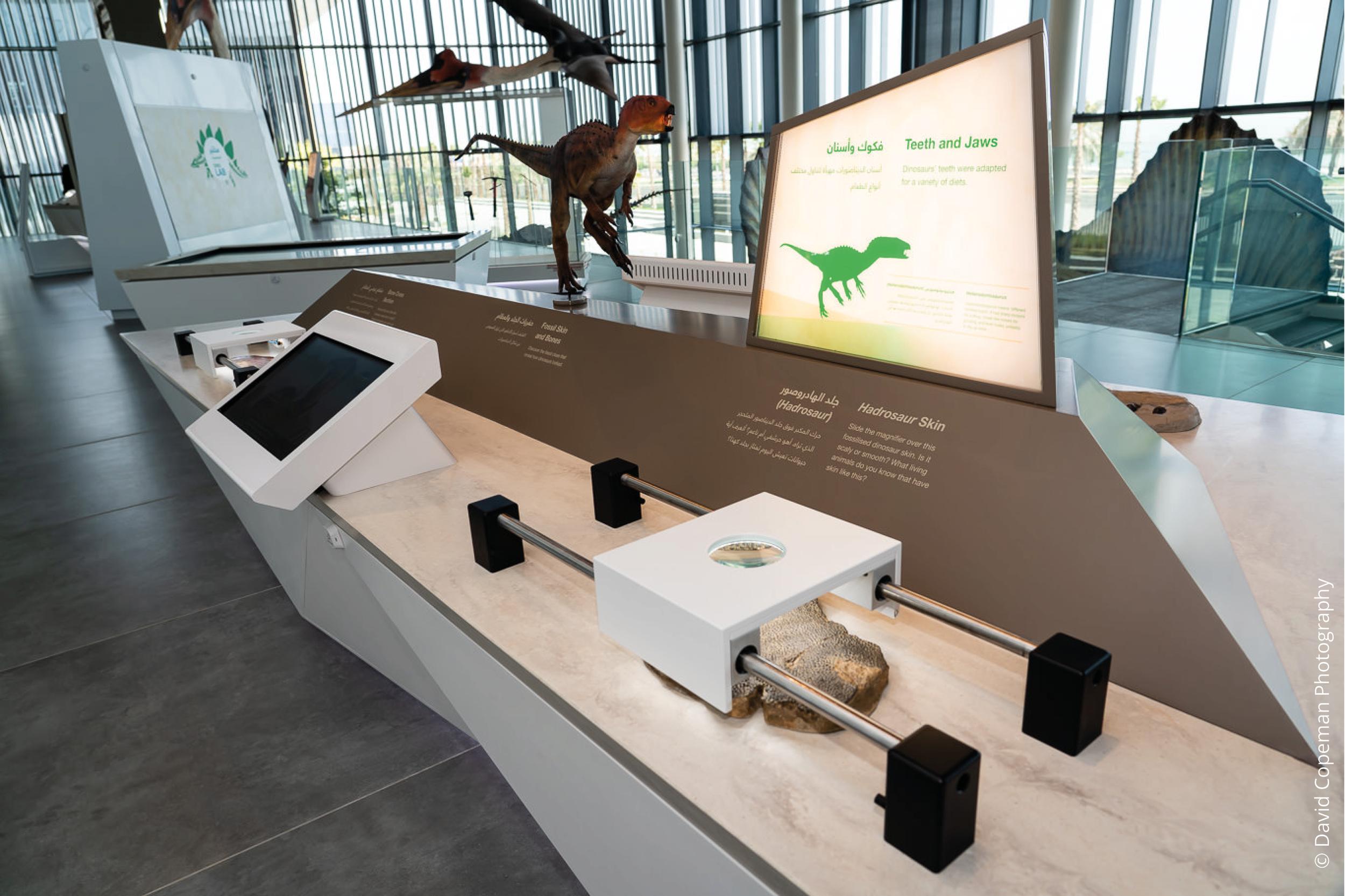 Sheikh Abdullah Al Salem Cultural Centre Age of Dinosaurs gallery © David Copeman Photography