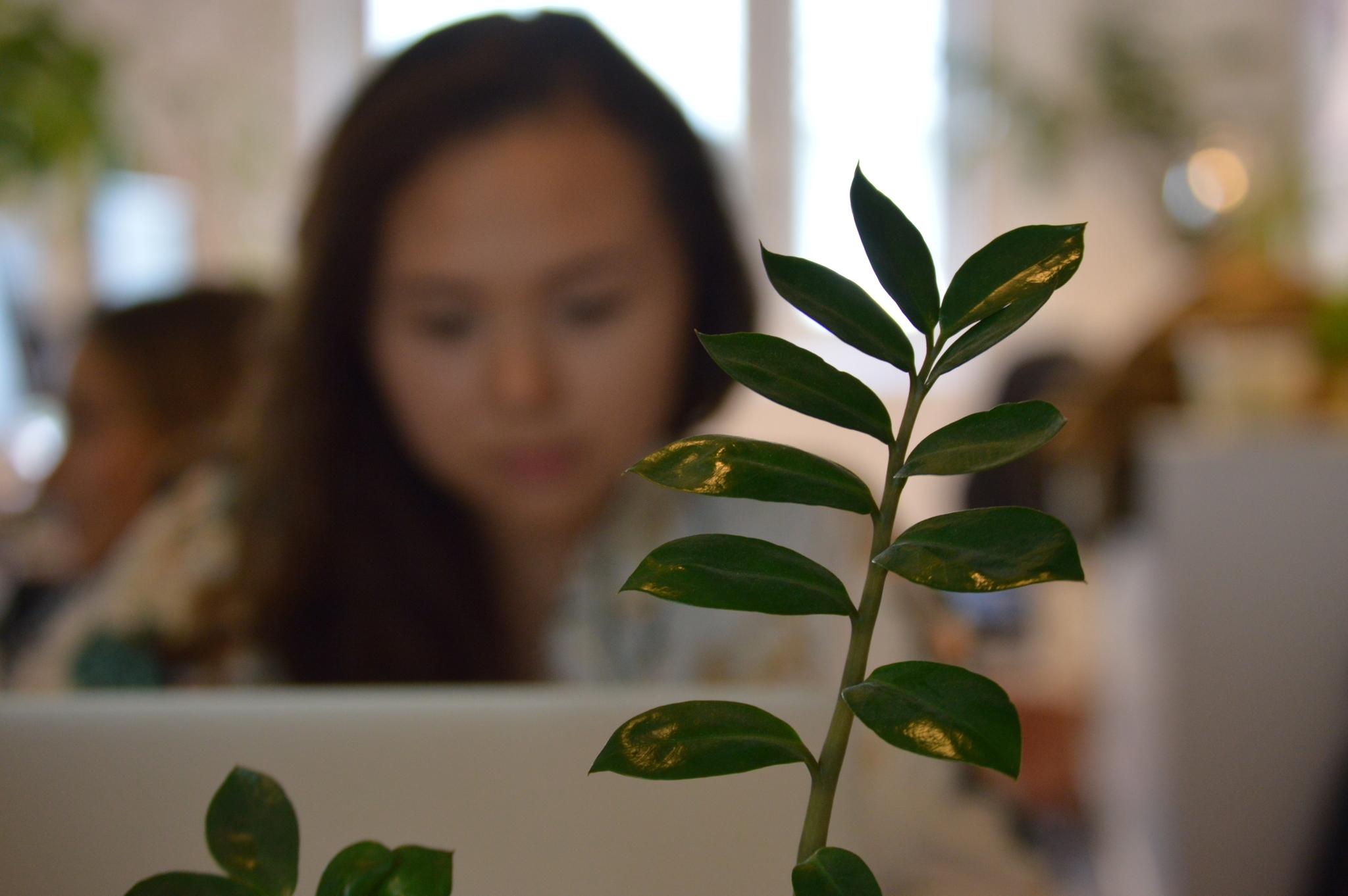 Visste du att växter hjälper dig att bli mer produktiv? Därför strävar vi efter att ha Sveriges grönaste inkubator.