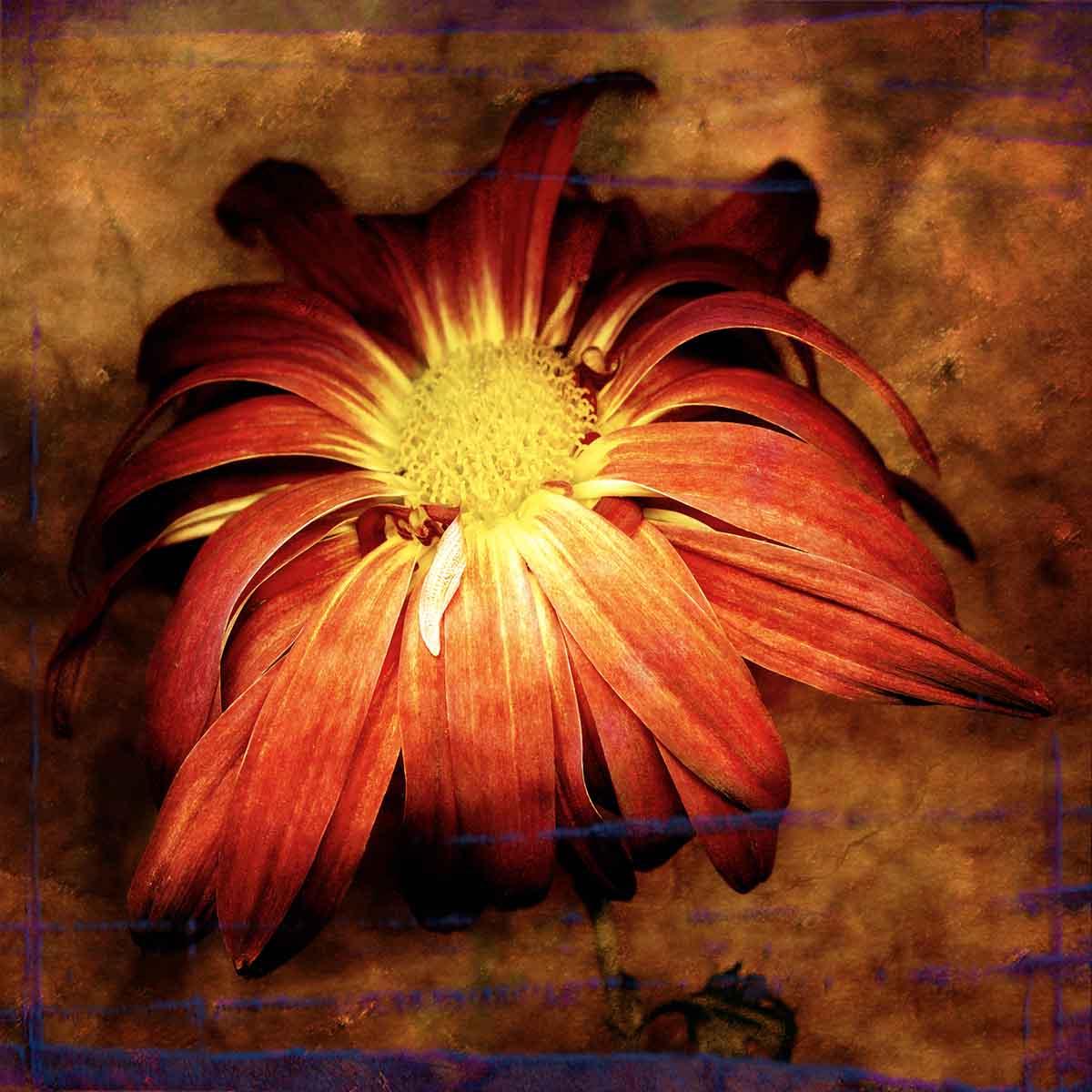 daisy-6.jpg
