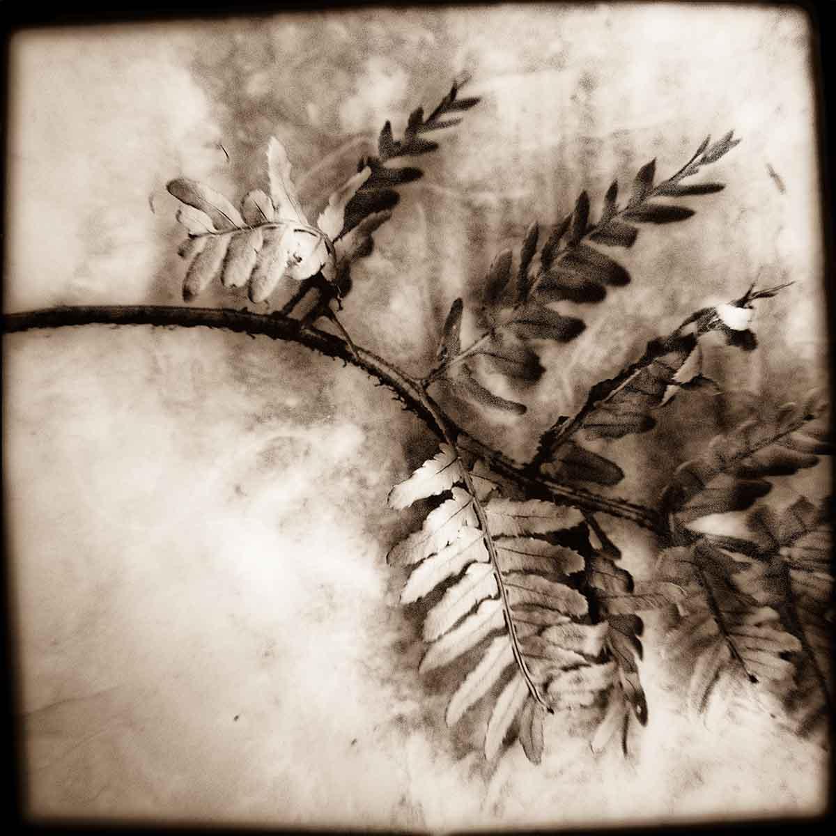 painted-fern.jpg