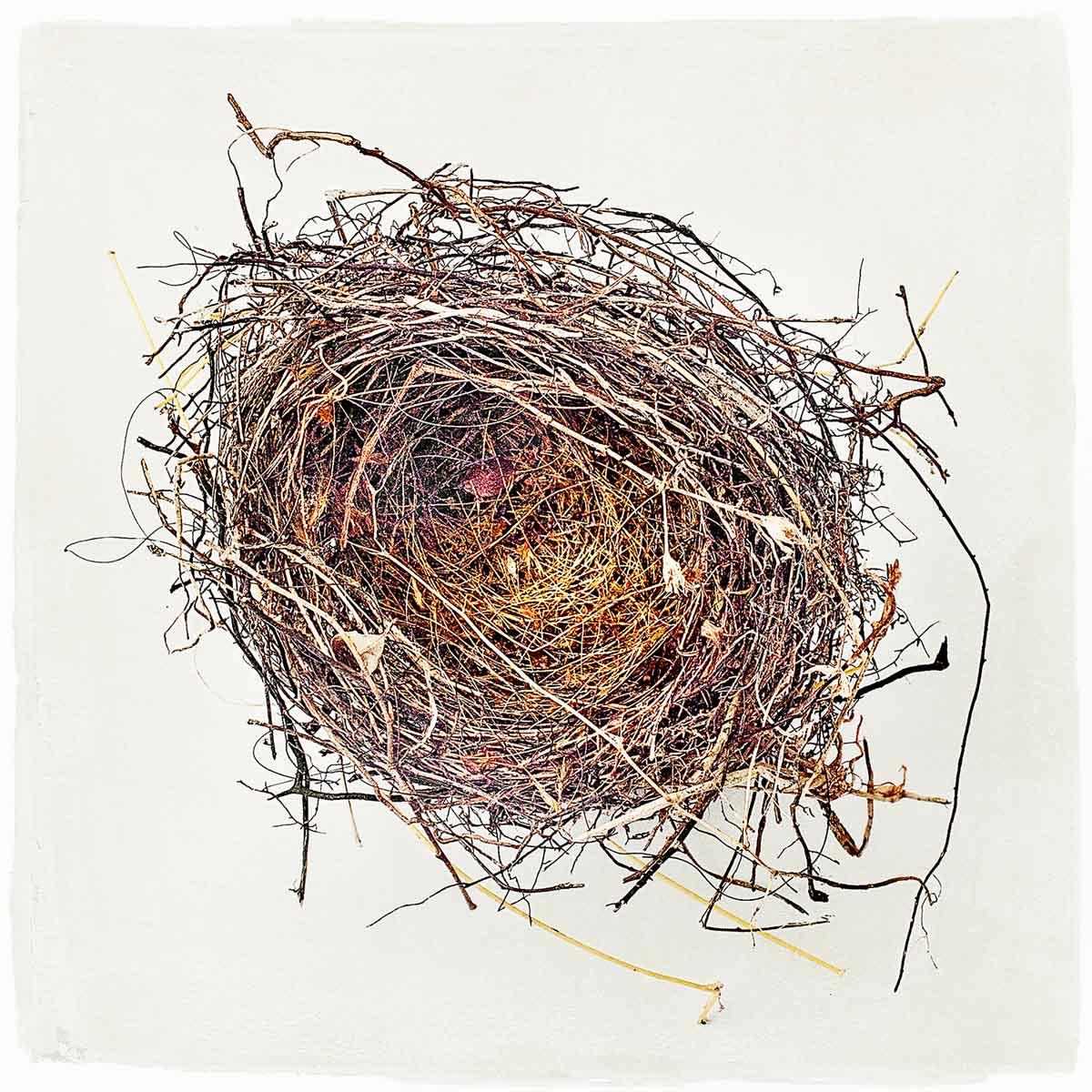 nest-#02.jpg