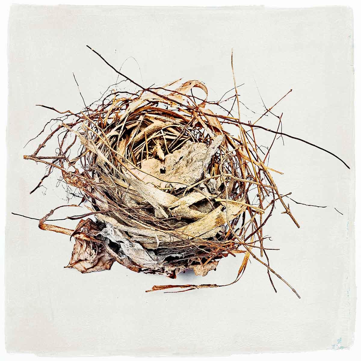 nest-#05.jpg