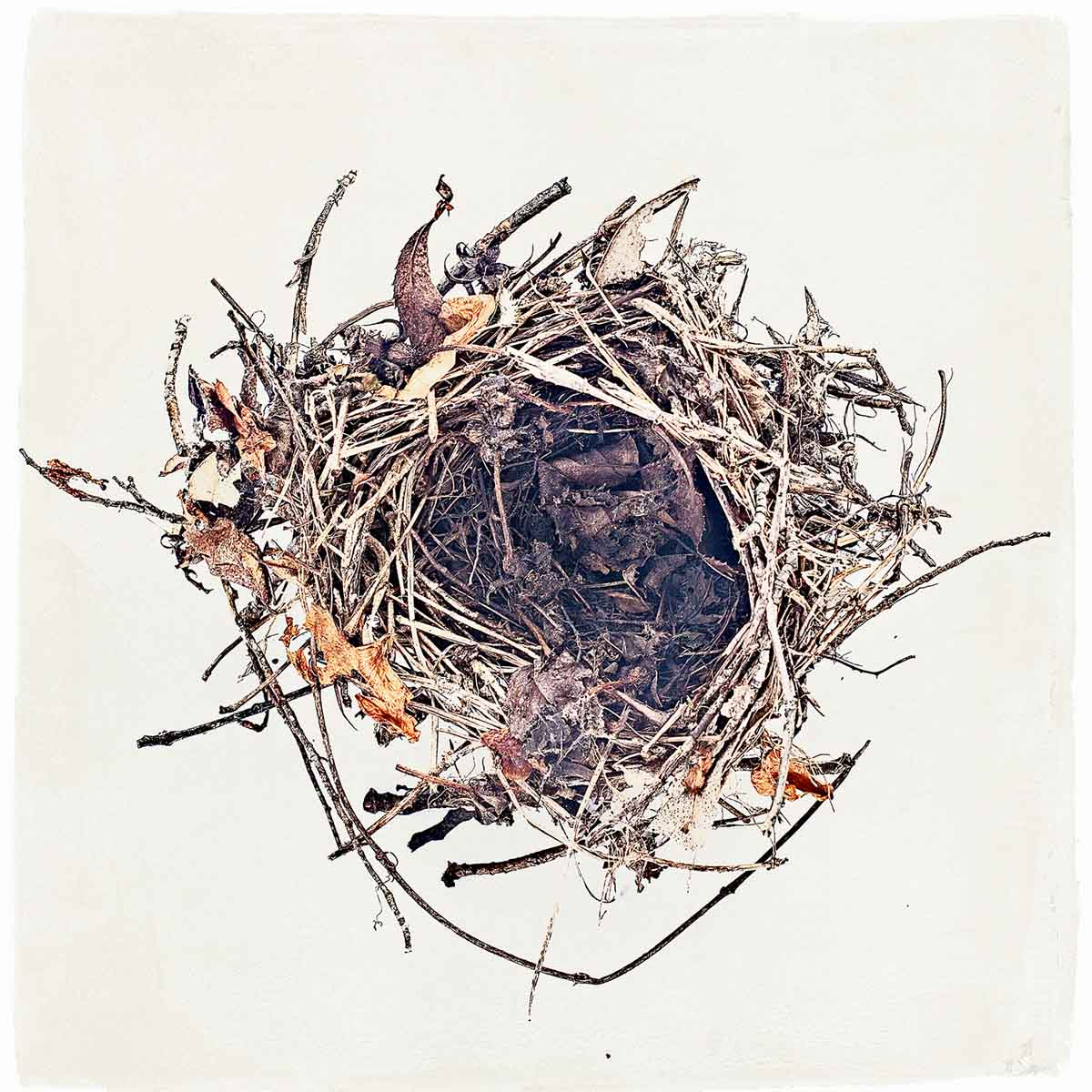 nest-#07.jpg