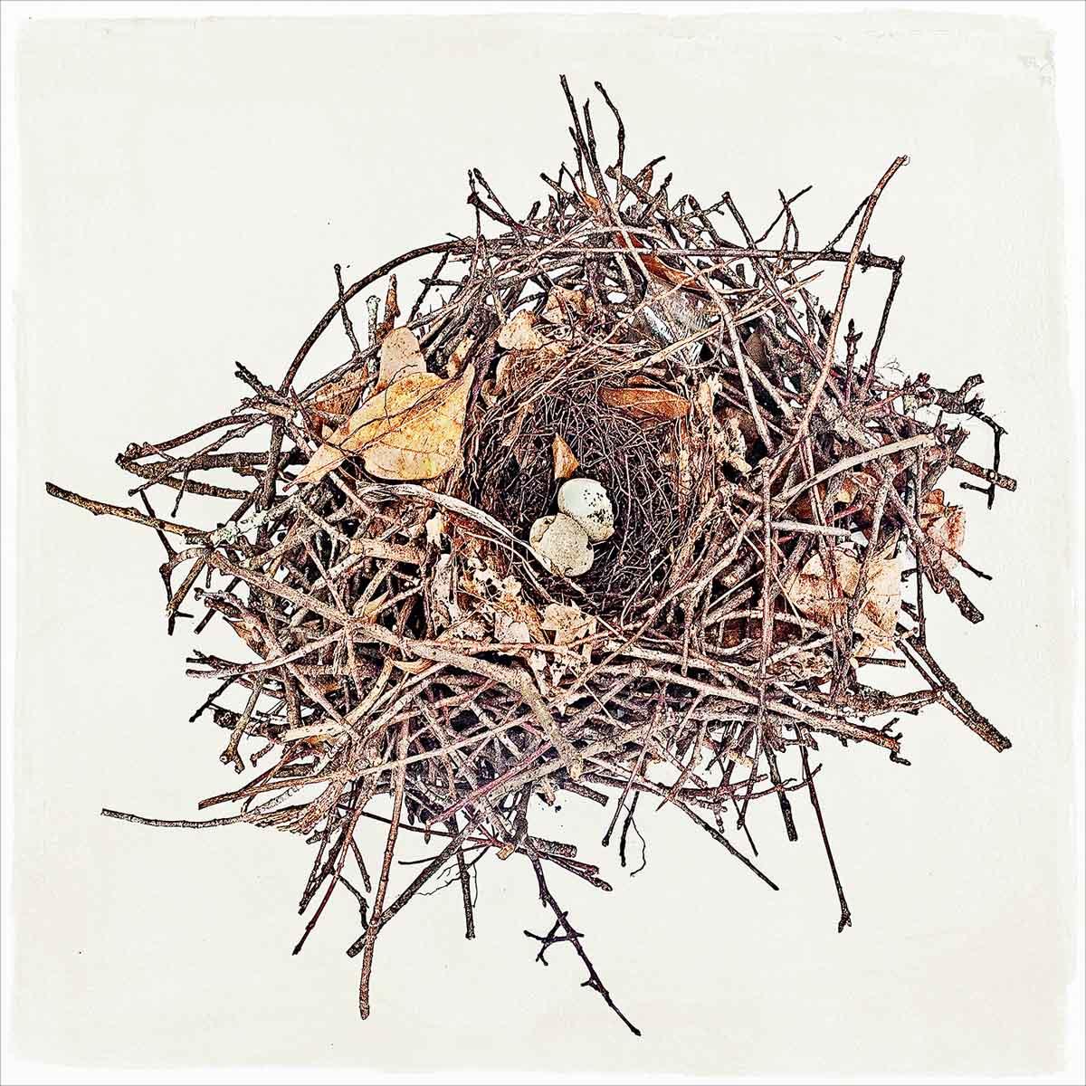 nest-#09.jpg