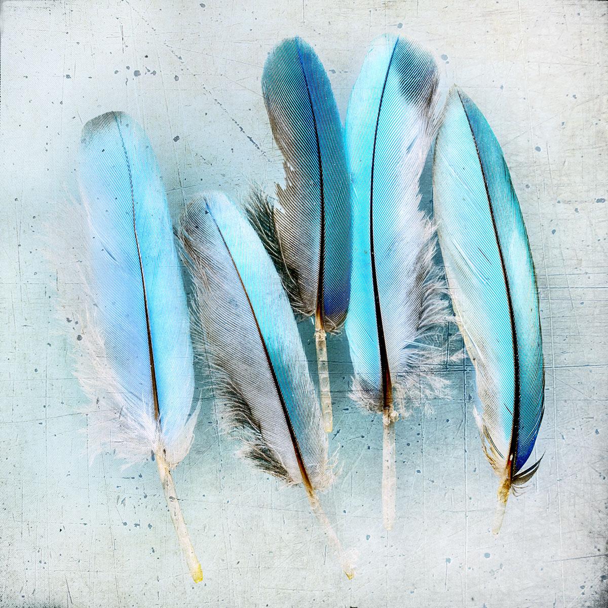 kingfisher004(1200px).jpg