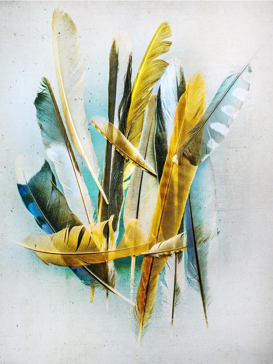 feathers #08.jpg