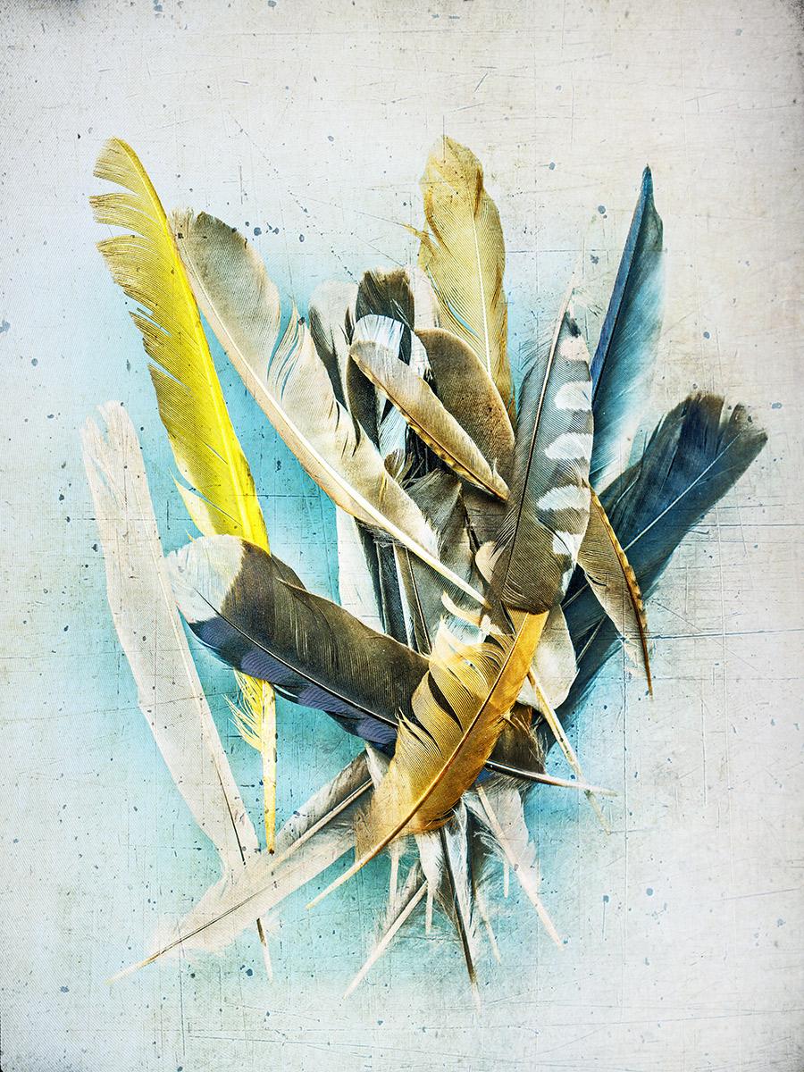 feathers #06.jpg
