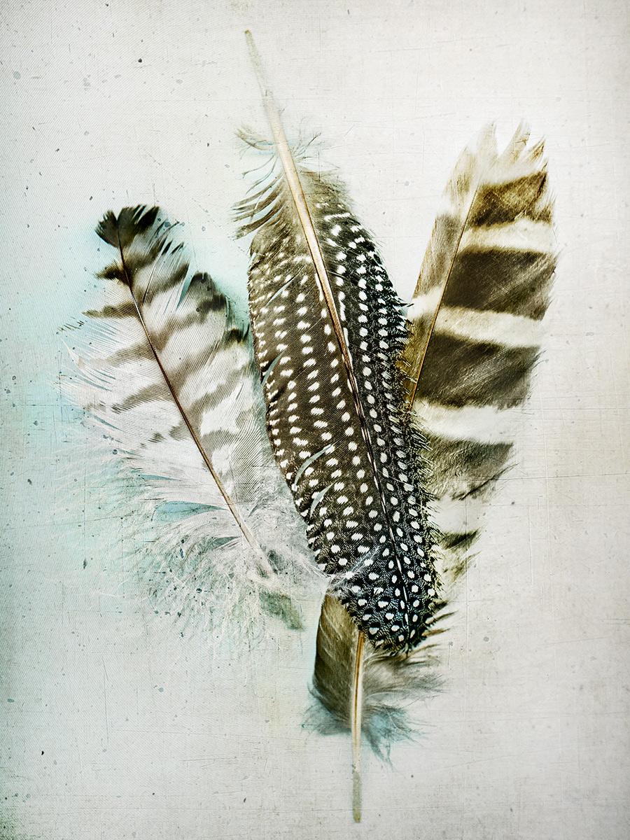 3 large feathers.jpg