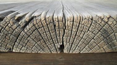 natural-wood-decay.jpg