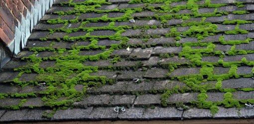 moss-on-roof-growing-mold-mildew-algae.jpg