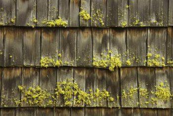 cedar-shake-roof-damp-moss.jpg