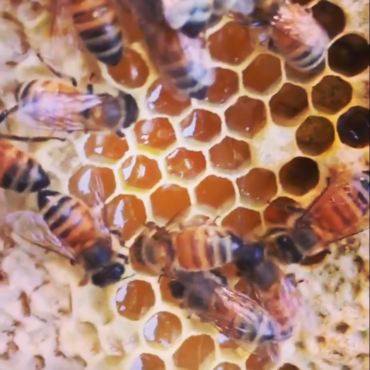 Inside one of our hives!