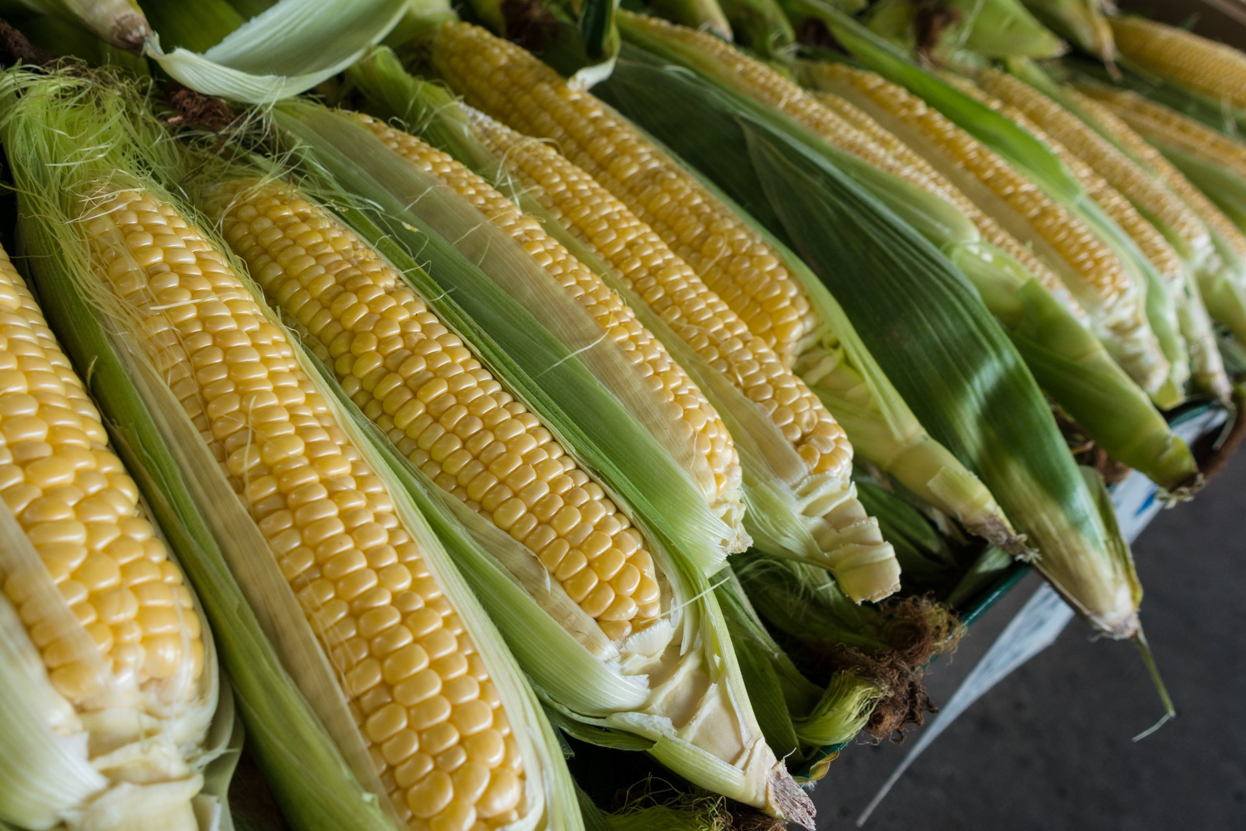Mirai sweet corn just looks like all the other kinds of corn.