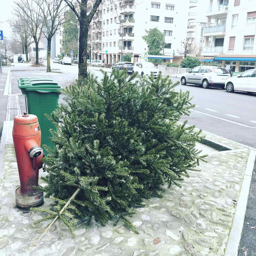 This beauty got dropped pretty quickly. According to the freshness of the branches, the CSI experts agree to say the tree was probably bought just one day before Xmas and abandoned in the street one day after this holy celebration. Worse, it seems that few branches were cut while the tree was still alive and thrown in a trash bin not far from him... 😨