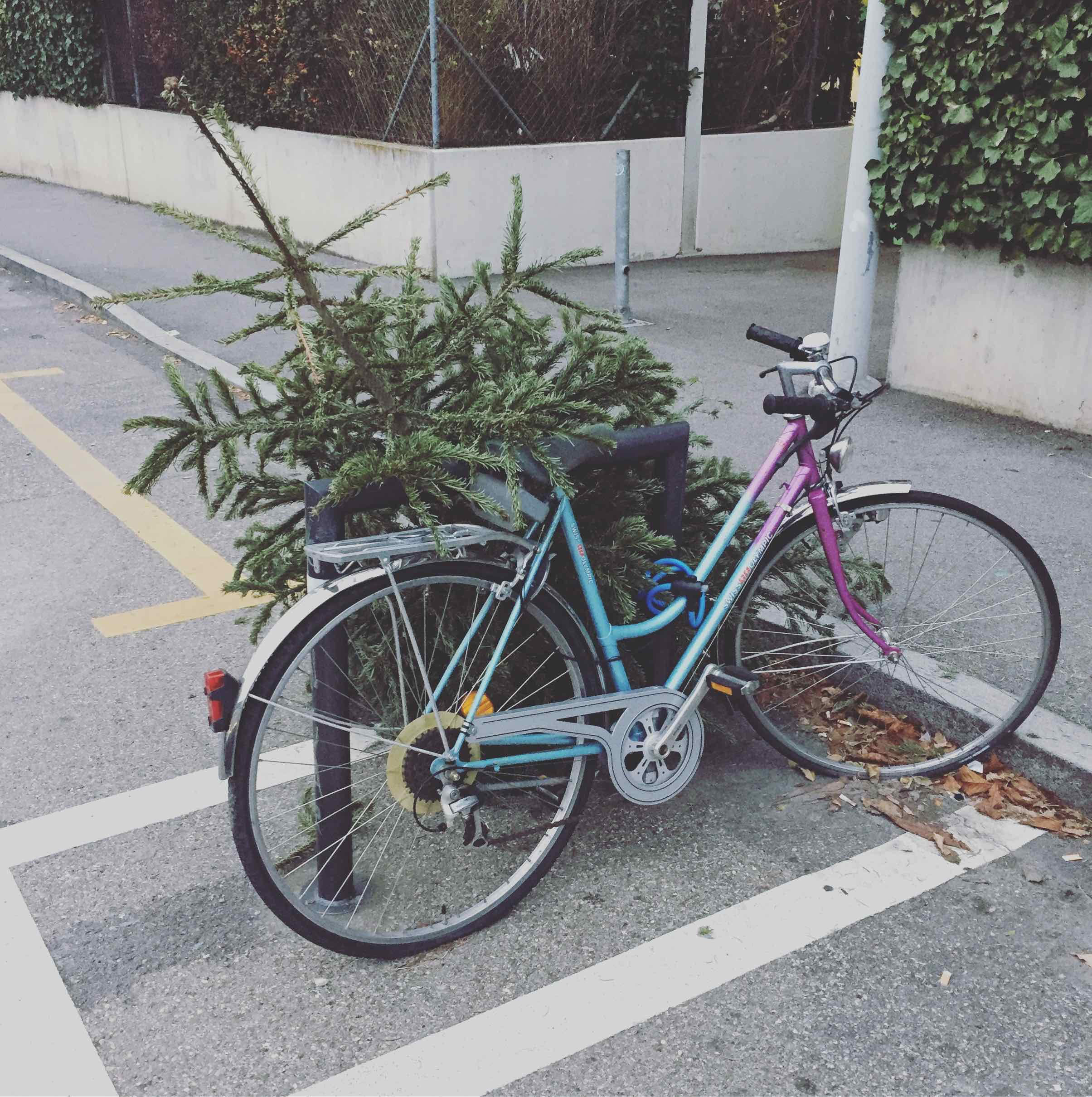 I think this Xmas tree decided to challenge his destiny and escape with a bike! I saw him trying to break the bike lock... Go Tree! Go! 🚲💨