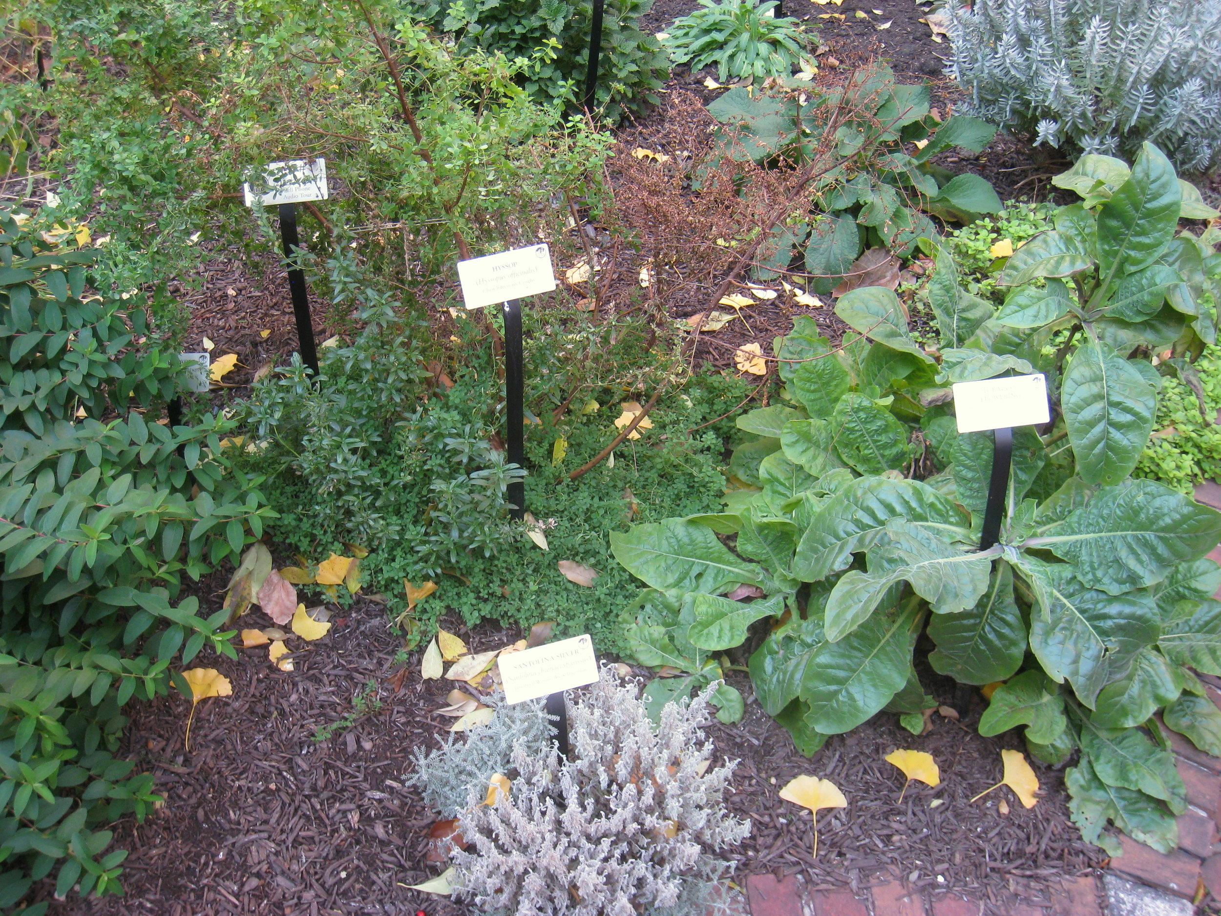 Native Medicinal Garden