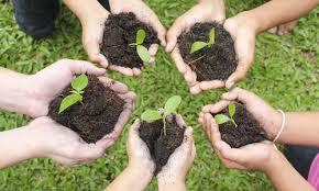 Organic Community Gardens
