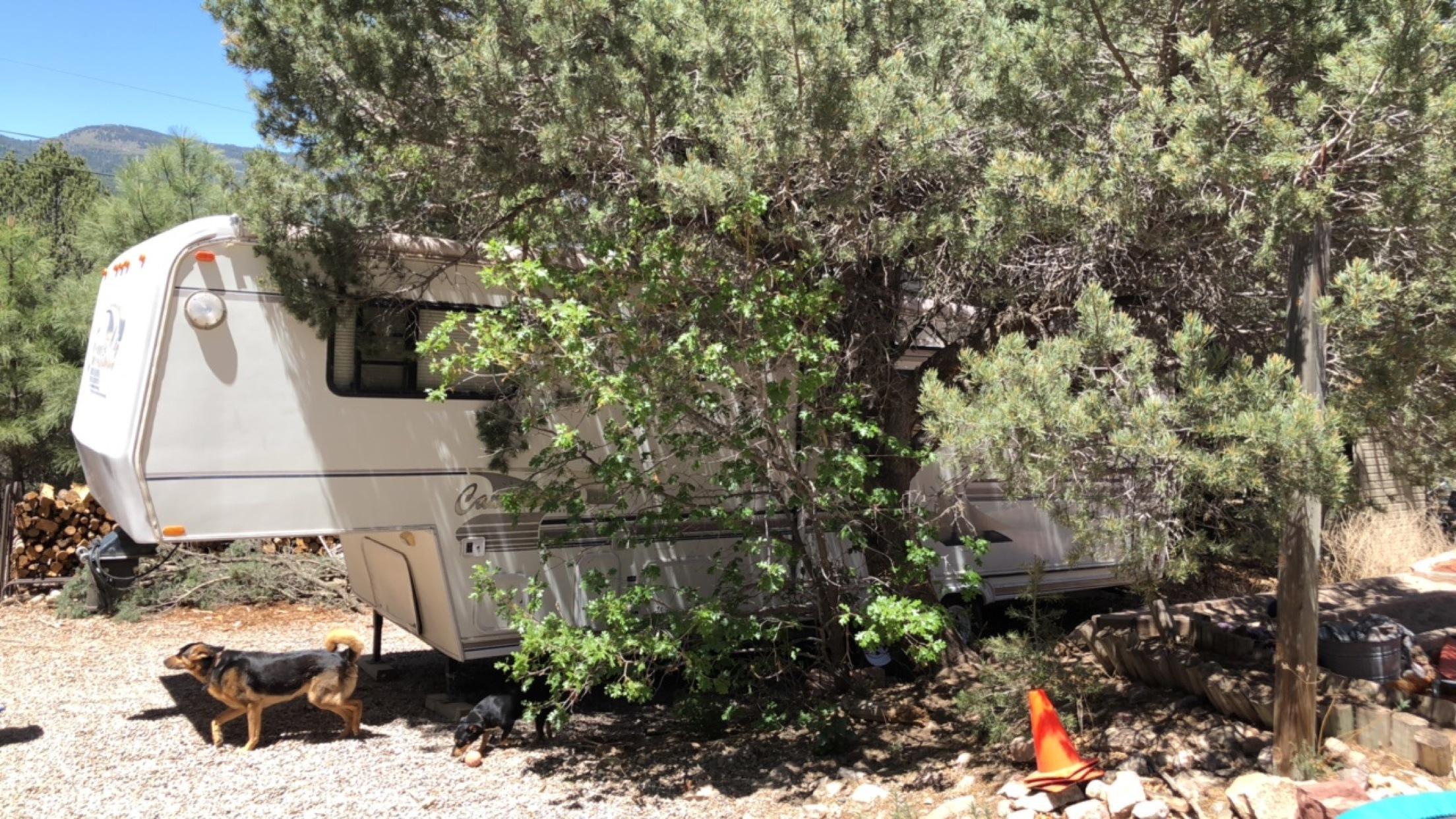 Hiding in the trees ft. Jordan's mom's dog!
