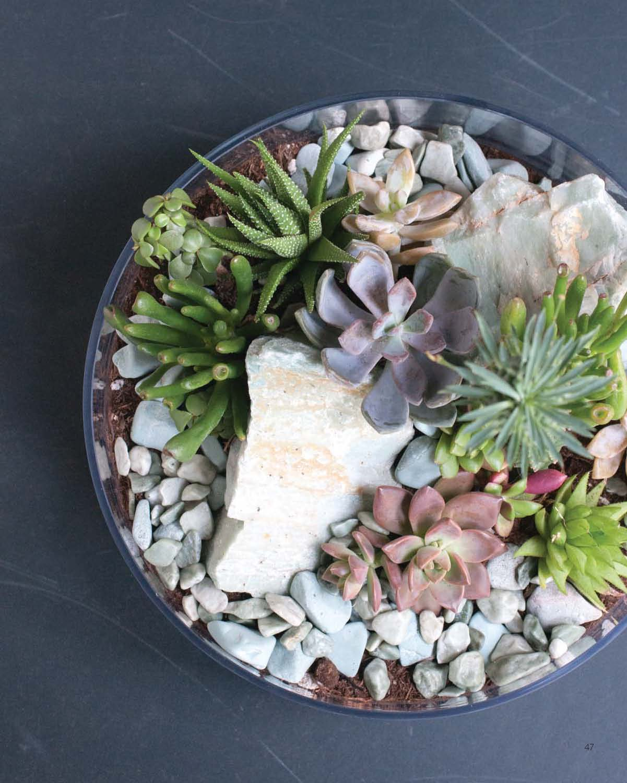 Modern Terrarium Studio - Cascading Rock Collection beauty image