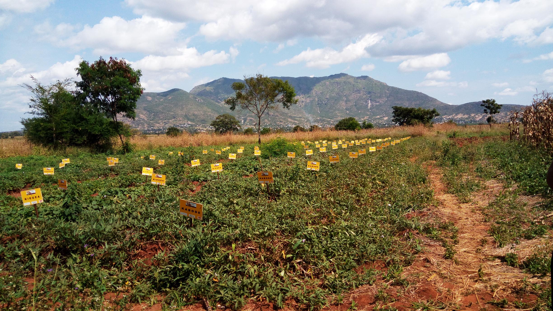 farm1a.jpg