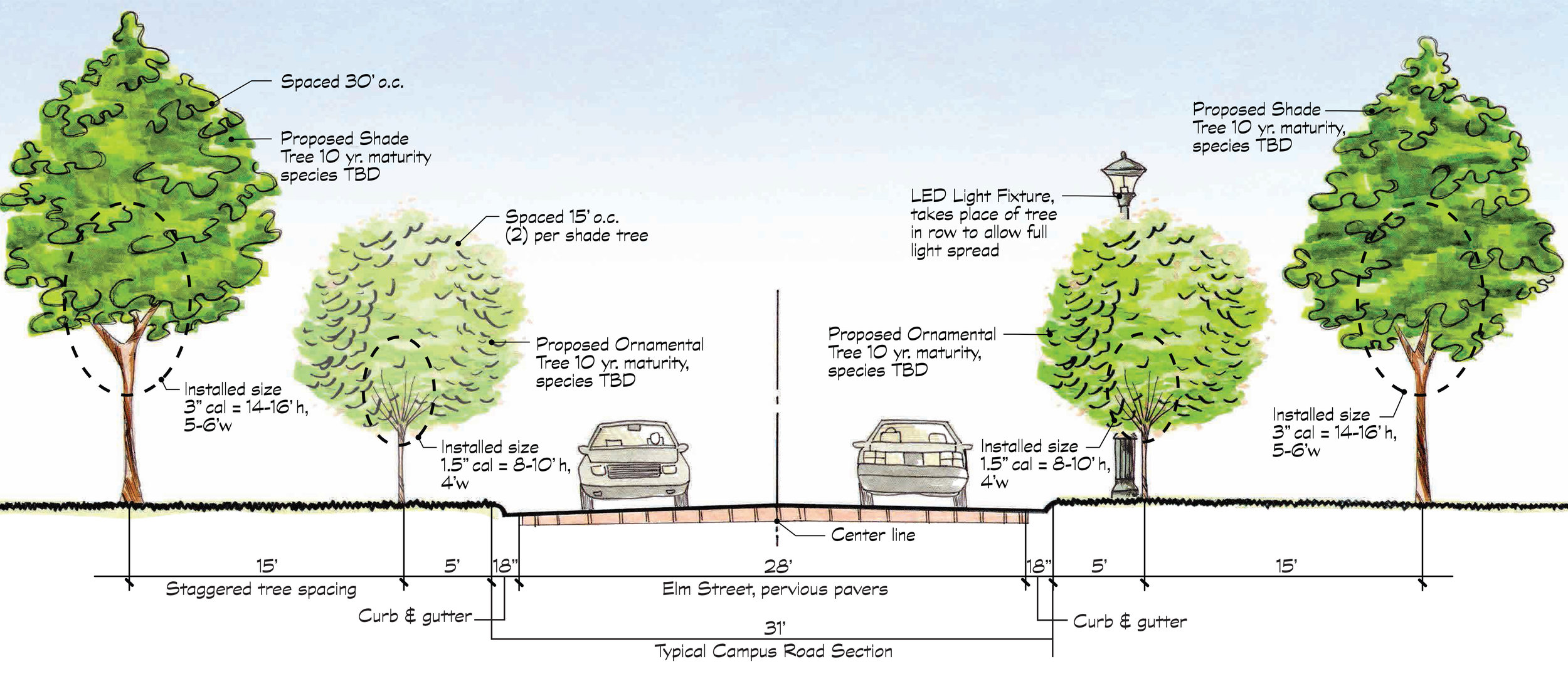 A section from the Campus Master Plan for the new allee planting.