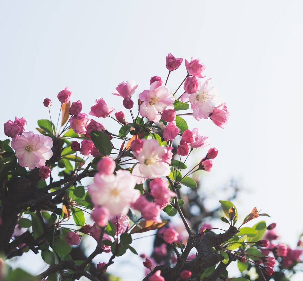 springgoals.jpg