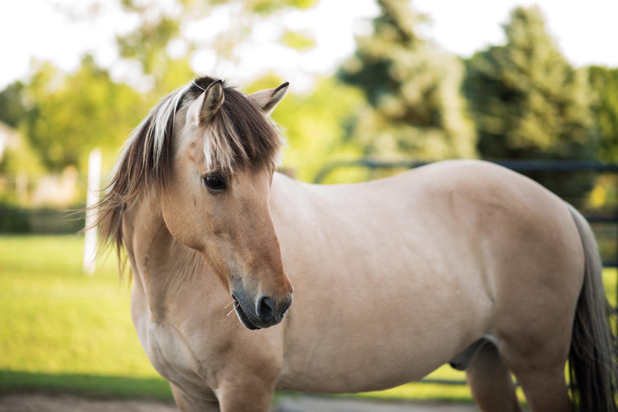 001_Horse_2016-08.jpg