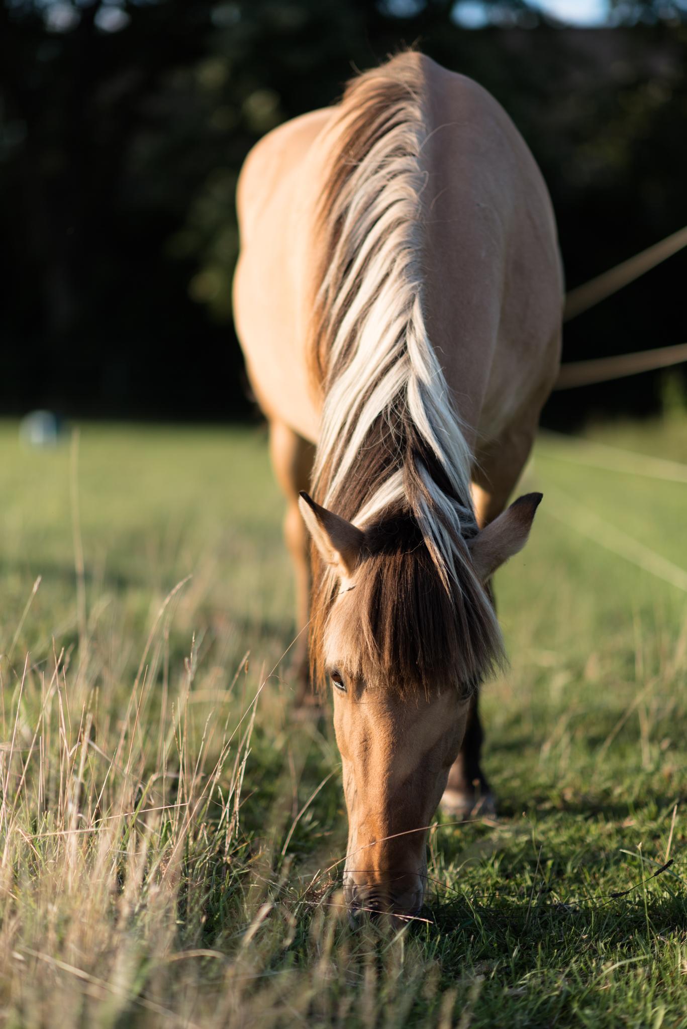 015_Horse_2016-08.jpg
