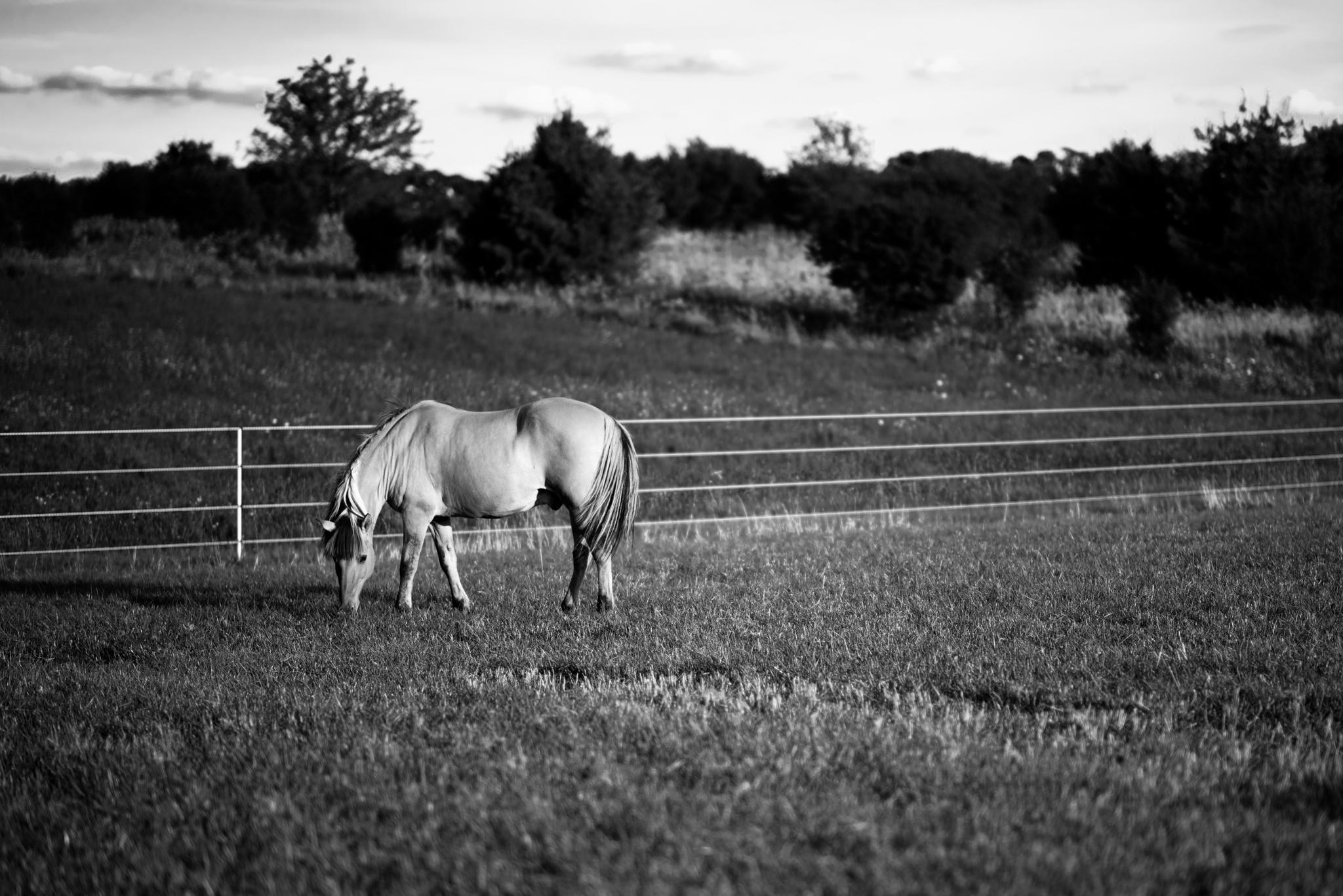 013_Horse_2016-08.jpg