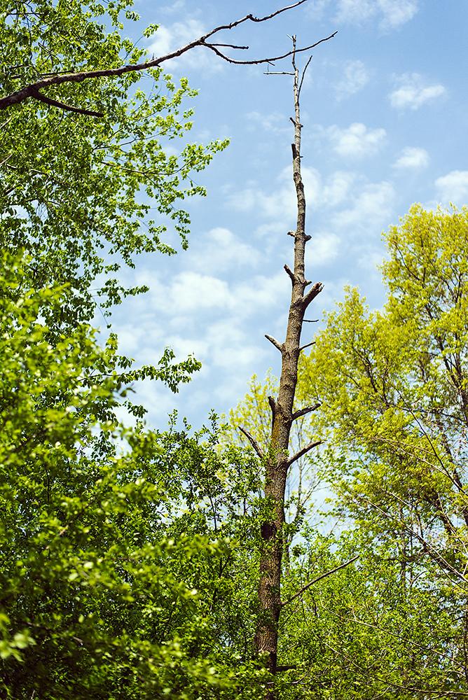 Cool dead tree