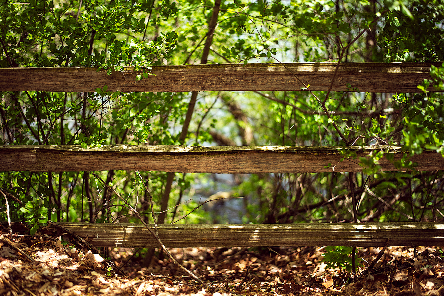 Wooden fence on trail in woods