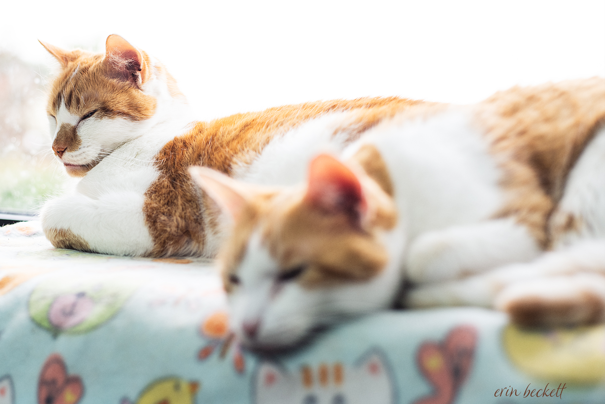 Hansel and Gretel taking a cat nap after their breakfast