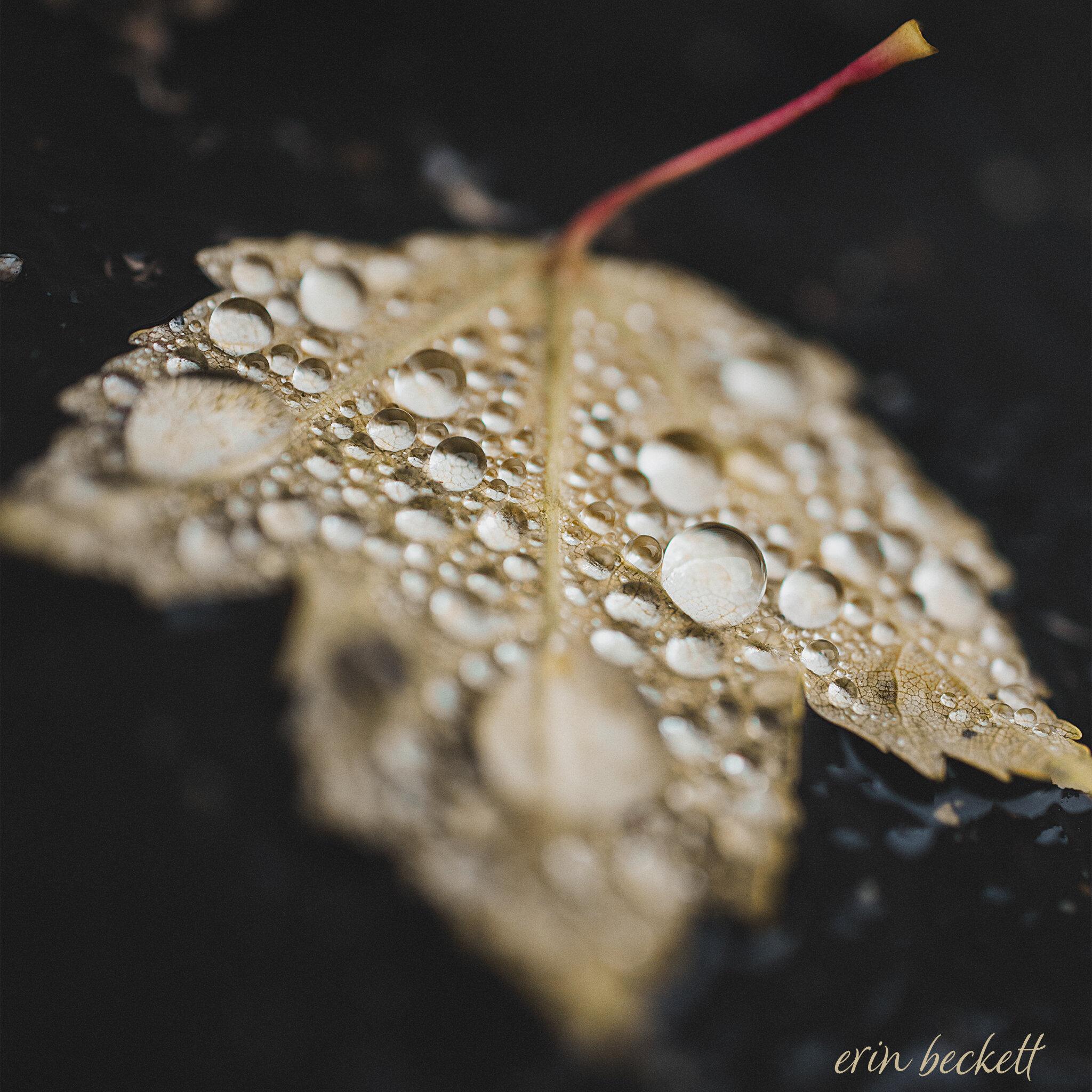 WetLeaf_ErinBeckett_2019-10-03_003.jpg