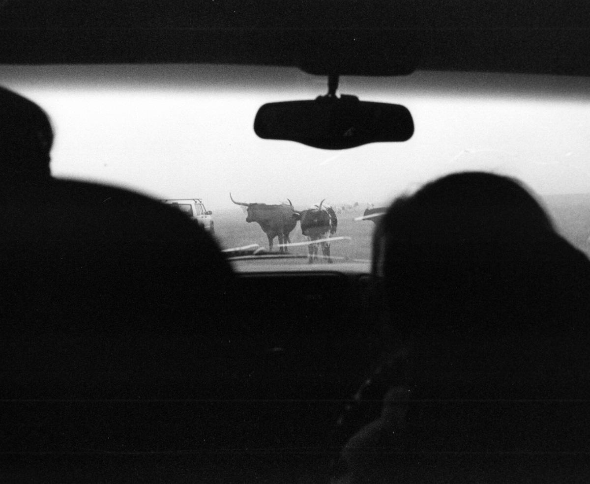 Wyoming traffic jam.