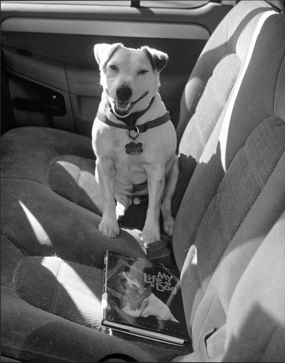 Lucky, a rescue dog. La Jolla, California, 2003.