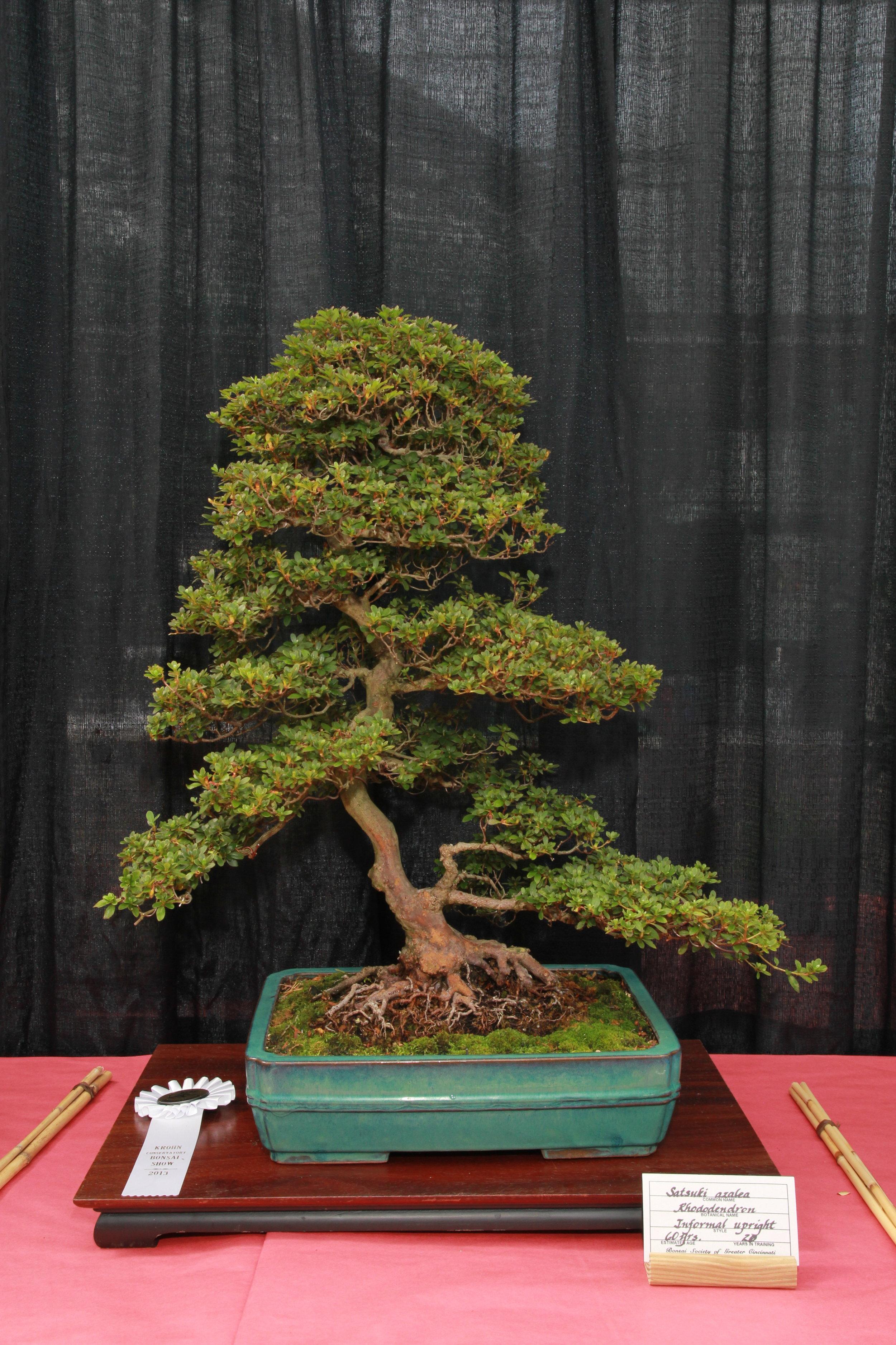 Tree Gallery Bonsai Society Of Greater Cincinnati