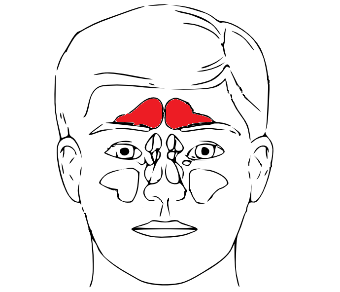 Sinus_frontalis_in_red.png