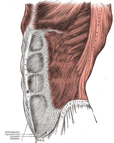 Grays_Anatomy_image392-e1459698386242.png