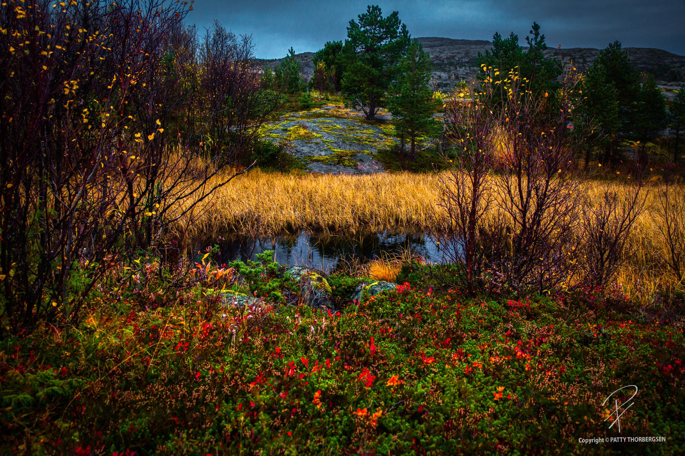 tjeldodden © Patty Thorbergsen-3.jpg