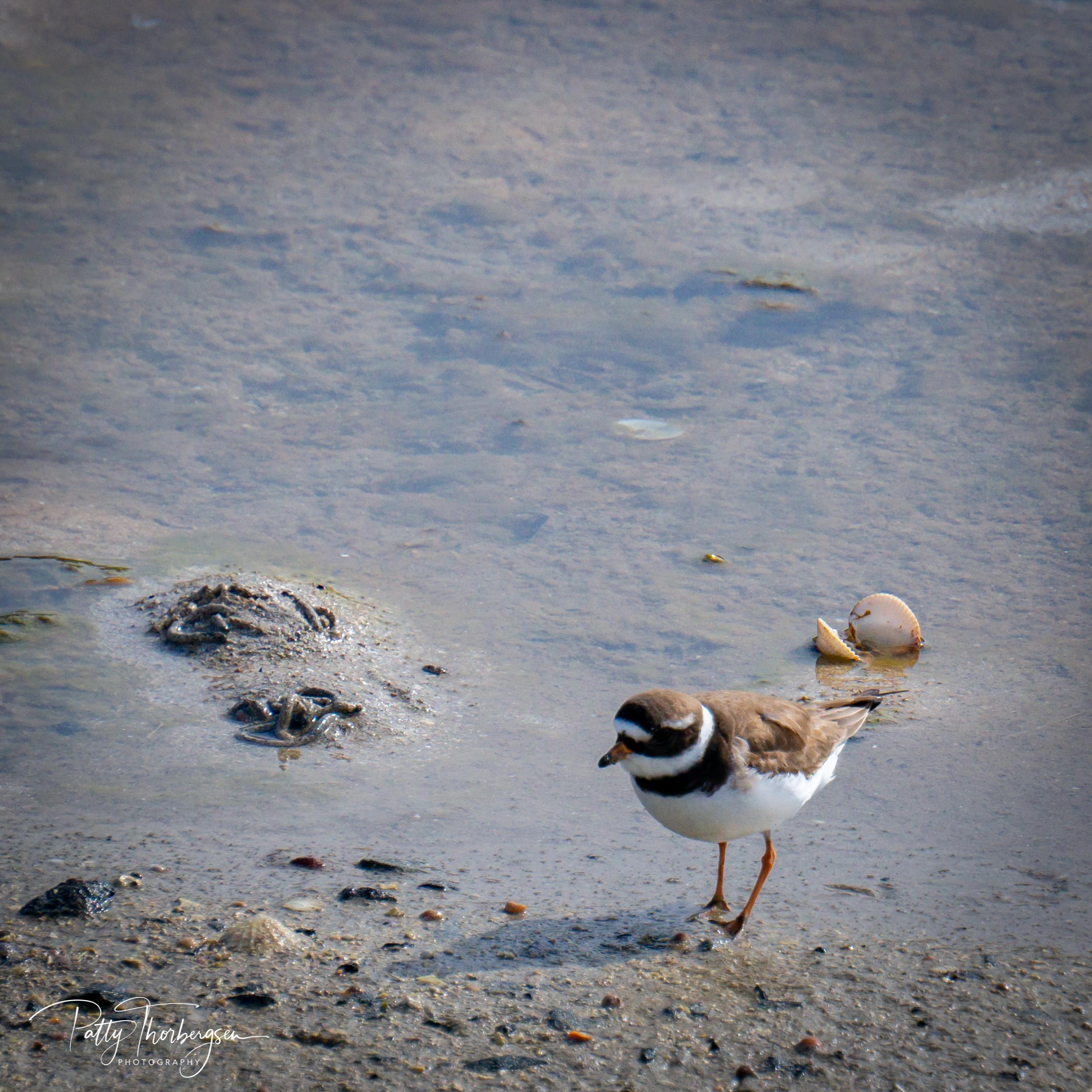 sandlo © Patty Thorbergsen-09726.jpg
